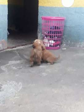 Cachorritoa en adopcion