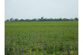 Campo para desarrollo Agrícola - Pujato Norte