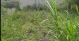 Terreno urbano parroquia pinguili (Mocha)
