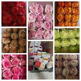 Rosas, Flores y follajes