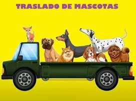 Traslado de mascotas