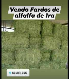 alfalfa de 1ra
