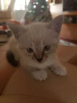 En adopción lindos gatitos