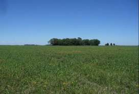 Campo en Cascada (Bs. As.), 54 ha. U$S 200.000