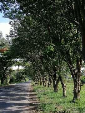 Poda, jardinería y tala de árboles