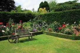 nos dedicamos a todo  de jardinerias en jeneral