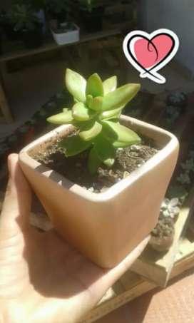 Suculentas cactus bonsai Barranquilla