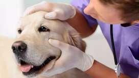 Médico veterinario a domicilio en santa maria