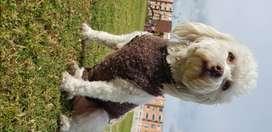JM Guarderia Canina