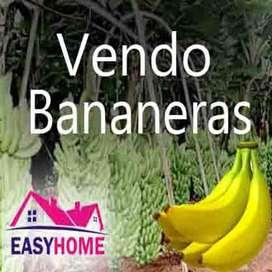 Vendo Bananeras en Ecuador - Venta de Bananeras