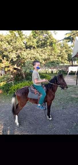 Vendo pony macho