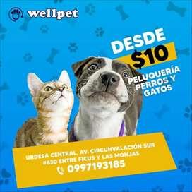 Peluqueria canina y felina desde 10 dólares servicio a domicilio y transporte