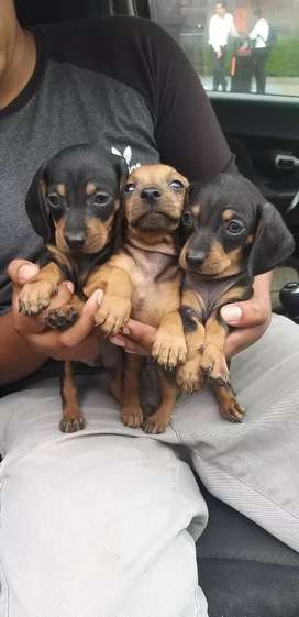 Salchichas cachorros H Y M