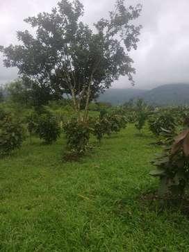 Propiedad en Venta Productiva en Sarayunga, Santa Isabel