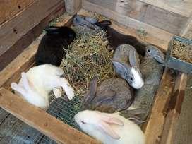 Conejo 30 dias