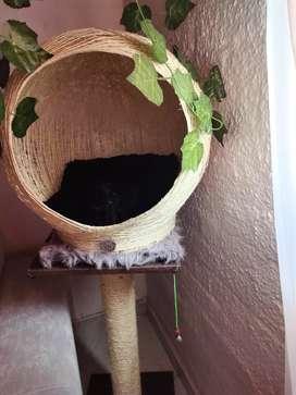Gimnasio para gatos nido