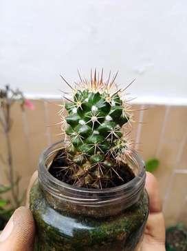Hermosas Suculentas y cactus