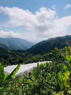 VENTA DE HERMOSA FINCA.  Armero Guayabal (Corregimiento San Pedro)