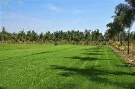 GRAS NATURAL POR BLOQUES-HUANCAYO