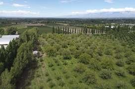 TERRANOSTRA Desarrollos Inmobiliarios - VENDE - Finca en Tupungato, Mendoza.