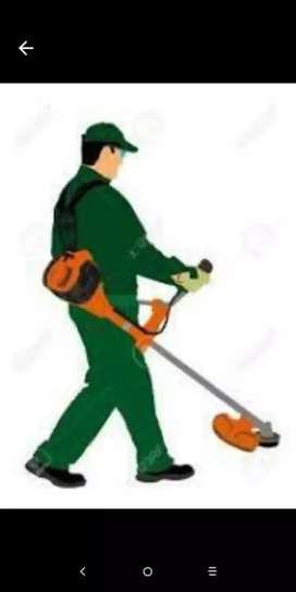 Corte de pasto a domicilió y limpieza