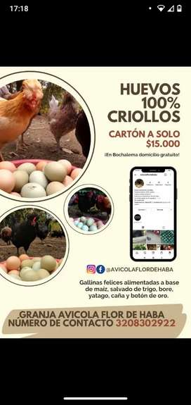 Venta de huevos criollos