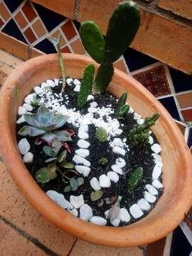 Hermosos mini jardines para decorar tu casa