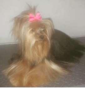 Busco empleo de peluquería canina