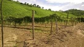 Terreno 15 Hectáreas en la vía al Zapallo