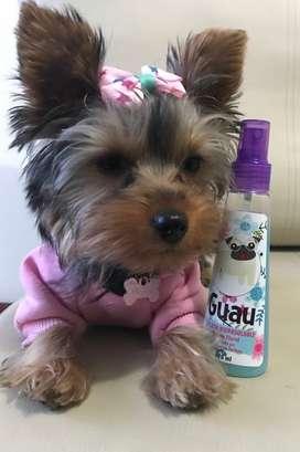 Perfumes y splah para gatos y perros Sin alcohol
