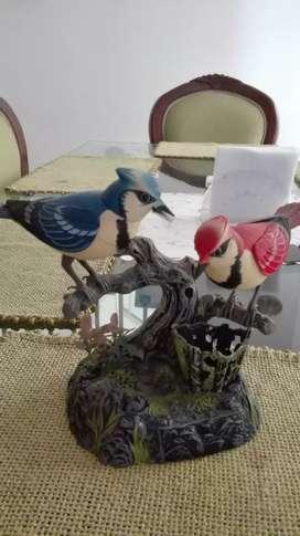 Vendo pájarito cantores