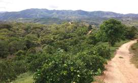 Vendo Finca en Llano de Palmas Rionegro(Santander)