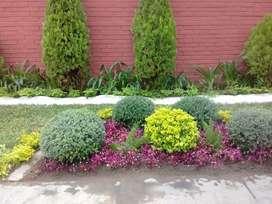 Servicio de : Instalacion y Remodelacion de Grass Natural ( Americano y Chino ) . Jardineria en general . SICAYA
