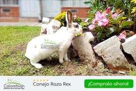 Venta de Conejos Rex  [Talla media] Especiales para mascota y producción.