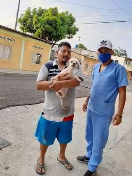 Peluqueria canina guayaquil