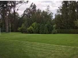 Corte de pasto y podas de ligustros y árboles pequeños