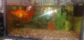 Peseta con peces incluidos