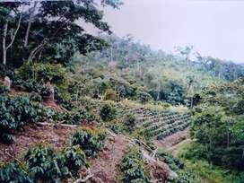 Terreno agrícola (chacra) Sector Alto Yurinaki, Perené, Chanchamayo