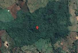 Venta de FINCA 14 hectáreas