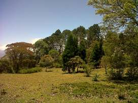 FOR SALE Property Pastures, rain forest and stream with fresh and pure water at San Ramón de Tres Ríos. Costa Rica