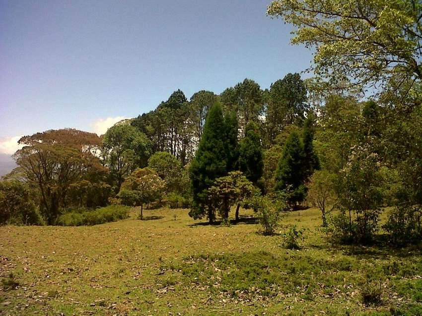 FOR SALE Property Pastures, rain forest and stream with fresh and pure water at San Ramón de Tres Ríos. Costa Rica 0
