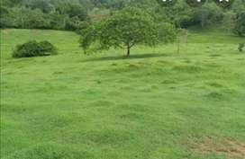 Finca de 93 hectáreas 60 limpias y 30 enrrastrojadas