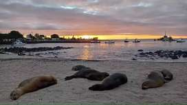 Paquetes Turisticos en Galapagos