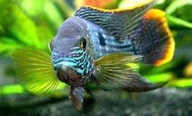 Venta de pez terror verde