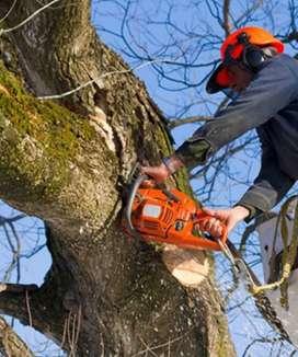Se realiza trabajos con arboles peligrosos o cualquier tipo de árbol