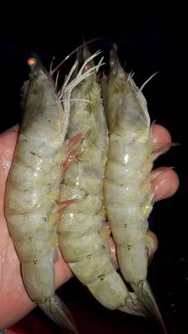 Busco cocinero en cocina de mariscos Ecuador peru