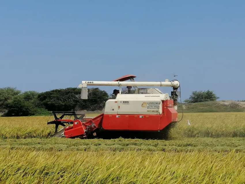 Cosechadora de arroz K-BOS, año 2018 0