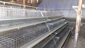 Jaula para gallinas ponedora