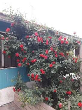 Vendo casa Vista Flores Tunuyan Mendoza