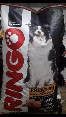 Ringo adulto premium